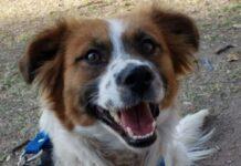 bruno cagnolino vietato ingresso casa