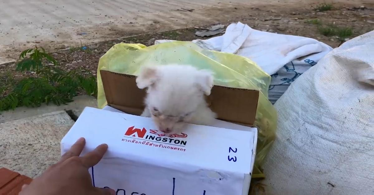 Un cagnolino chiede aiuto perché è stato abbandonato (VIDEO)