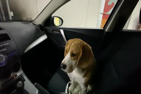 Cane accompagna il padrone a lavare la macchina (VIDEO)