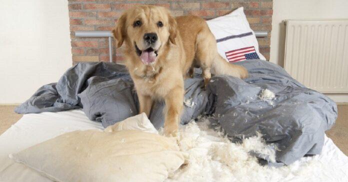 cane mette sottosopra camera da letto