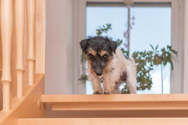 Cane anziano agitato: perché si comporta così e come fare a calmarlo