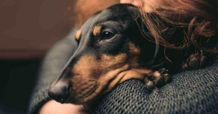 cane tra le braccia di una donna