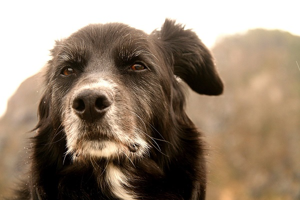 cane riflessivo