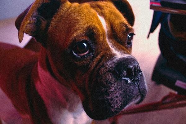 Cane anziano si spaventa degli starnuti: come cercare di tranquillizzarlo?