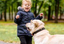 cane aggressivo con un bambino