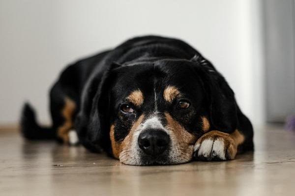 cane che sta male