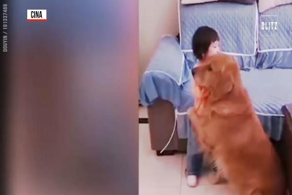 Un cane difende bambina dai rimproveri della madre (VIDEO)