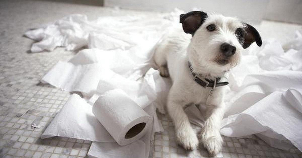 cane circondato da rotoli di carta