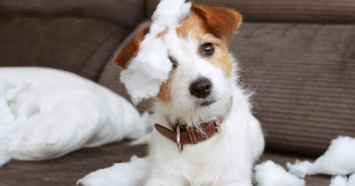 cane rovina la tappezzeria