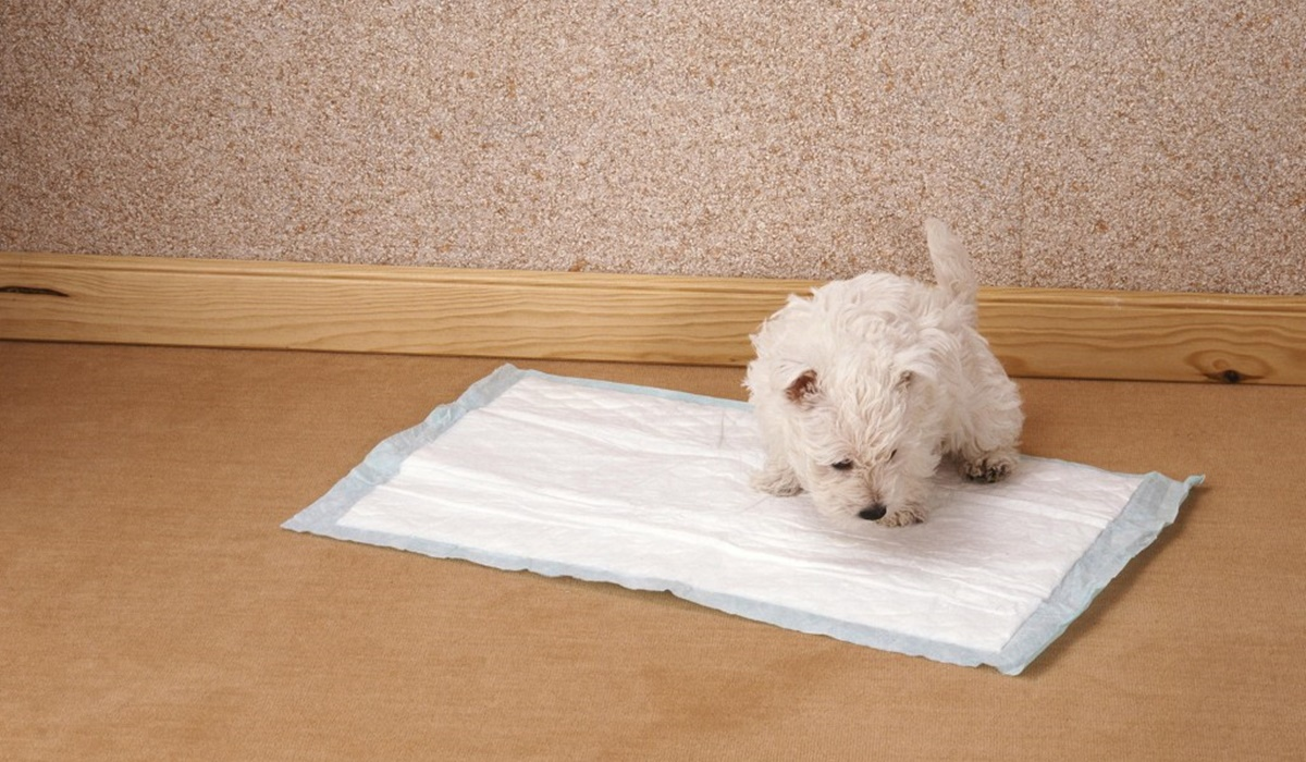 cucciolo bianco a pelo riccio