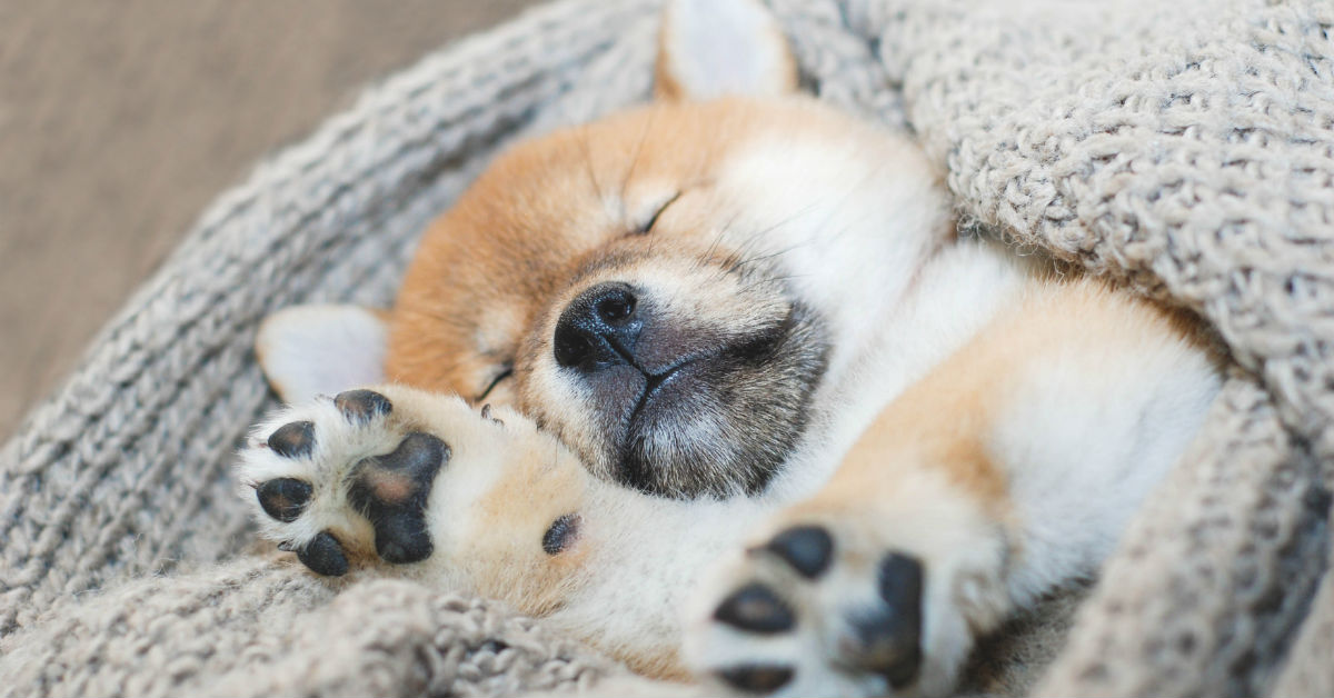 cucciolo di cane dorme profondamente