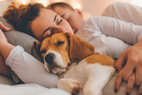 Perché il cane dorme sempre sui tuoi vestiti? Ecco tutte le ragioni