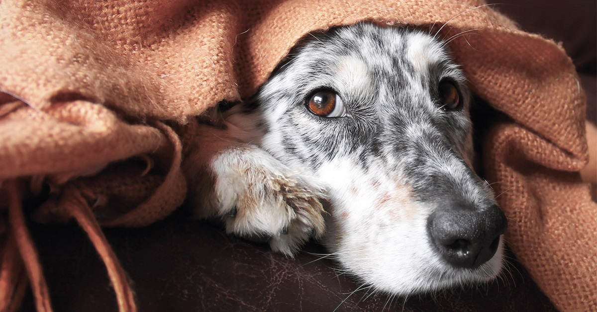 cane spaventato