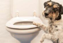 cane sorpreso in bagno