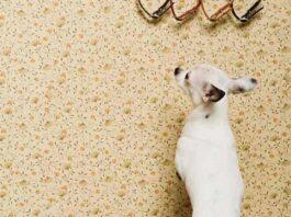 cane appoggiato al muro