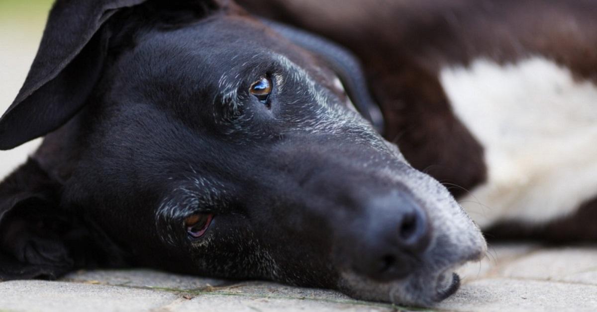 Cane mangia i calcinacci: qual è il motivo per cui lo fa e perché bisogna impedirglielo