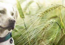 cane accanto a forasacchi verdi