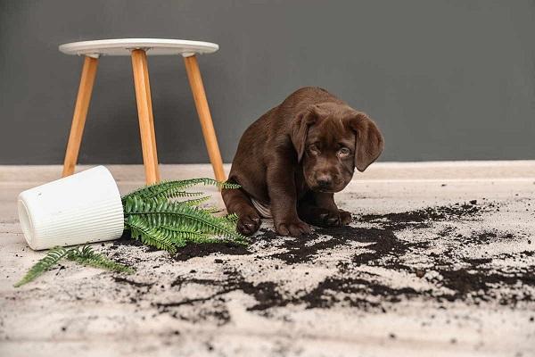 Cane non smette di mangiare le piante: come impedirgli di farlo