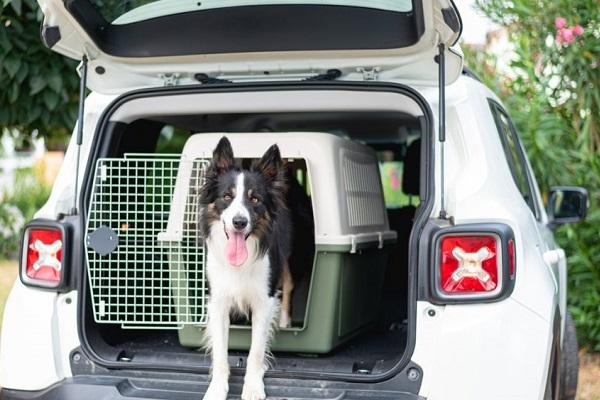 cane trasportino e portabagagli