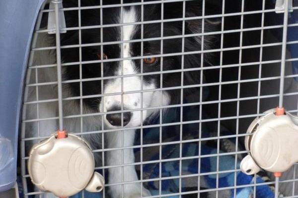 cane dentro il trasportino