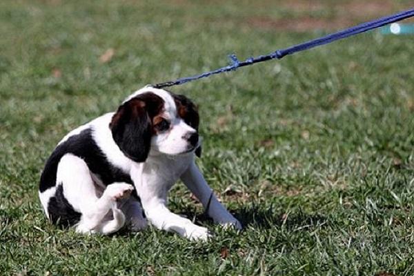 cucciolo di cane che protesta