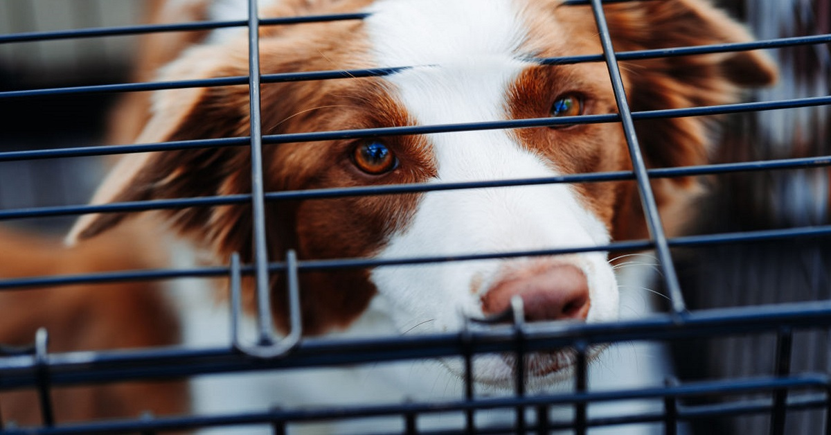 cane nel kennel