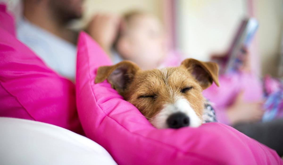 Il cane non vuole rientrare a casa: perché succede e come tranquillizzarlo
