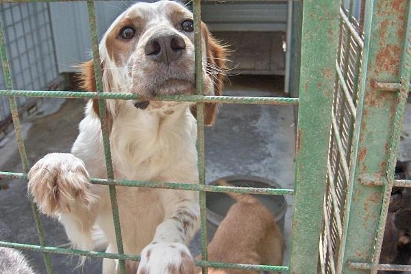 Un cane preso da adulto può affezionarsi comunque oppure no?