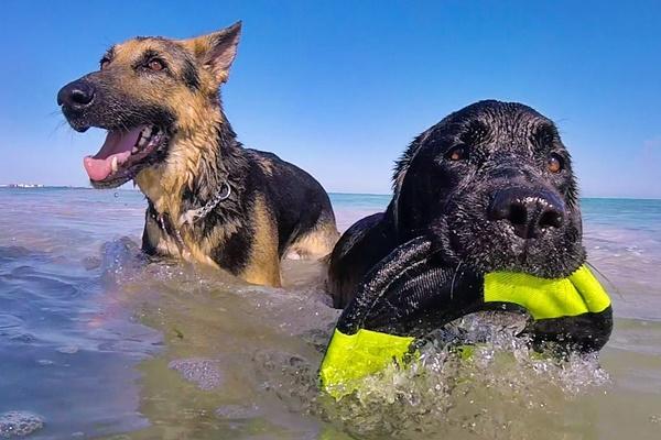 Cane può fare il bagno dopo mangiato? Ecco che cosa bisogna sapere