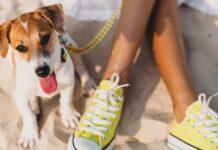cane e scarpe gialle