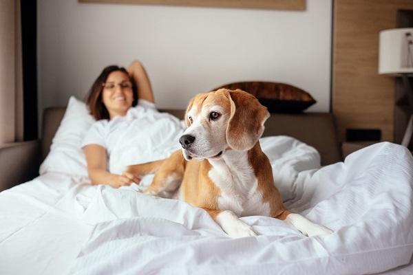 cane ai piedi del letto