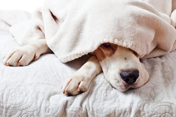 Cane sonnambulo, esiste? Come capirlo e cosa si può fare in questi casi
