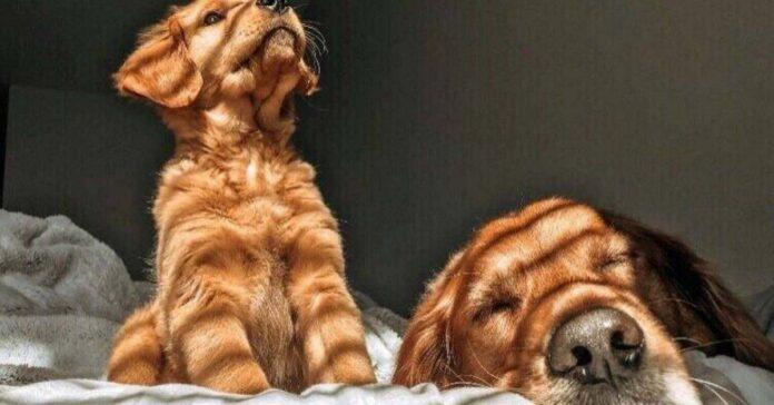 cani al sole della finestra