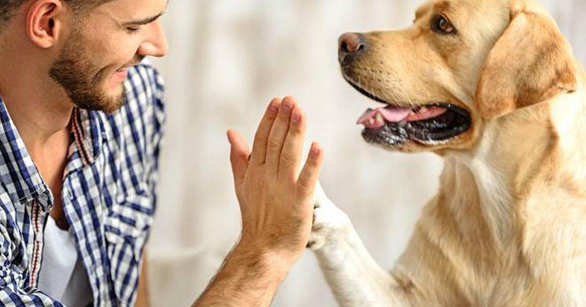 Il cane vuole acchiappare il pesce rosso: come insegnargli a non provarci?