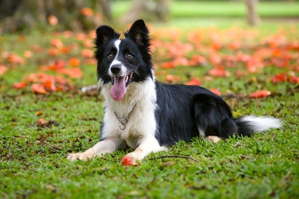 Cani bianchi e neri: tutte le più belle razze di cani bicolori