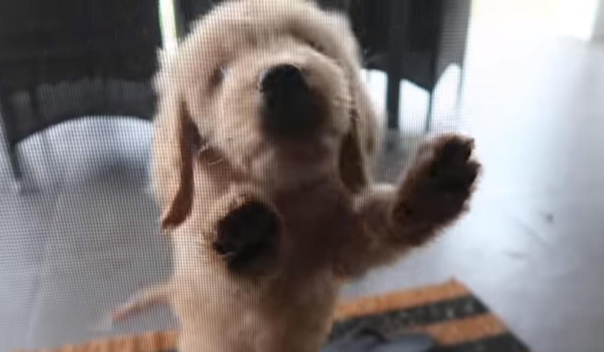 cucciolo che graffia la porta