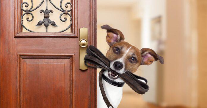 cane dietro alla porta