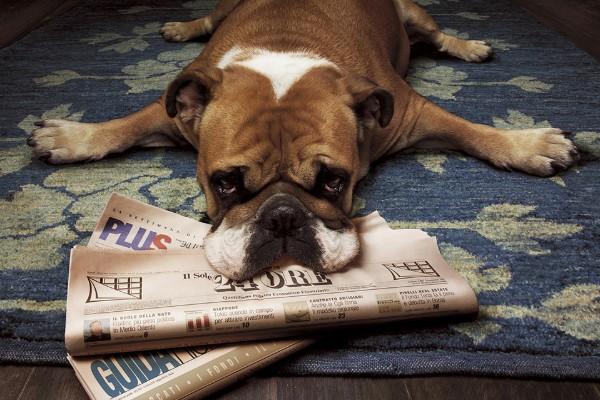 I cani riescono ad aprire le maniglie? Come farglielo imparare (o dissuaderli)