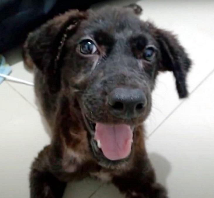 Carbonella, il cane salvato da un cassonetto dell'immondizia (VIDEO)