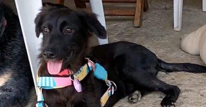 carbonella cane salvato da cassonetto spazzatura