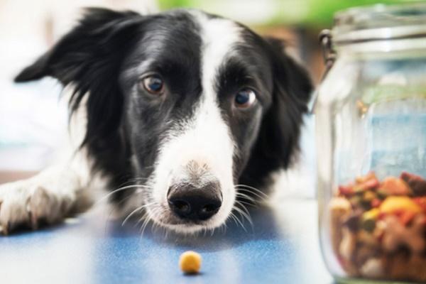 cane che vuole mangiare