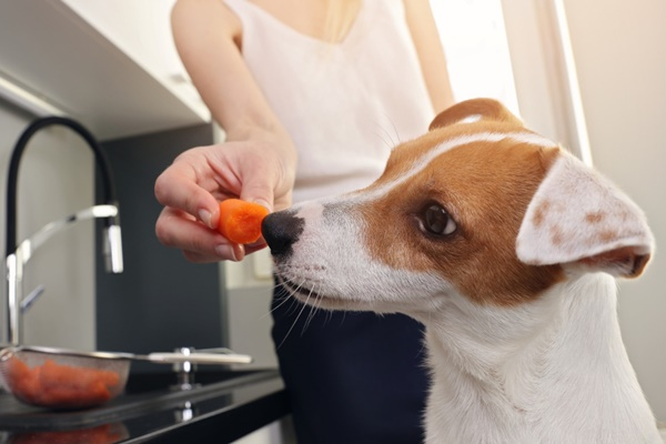 dare la frutta al cane