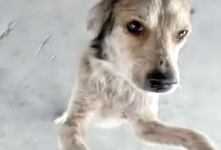 coco cane ritrovato chiamata amico