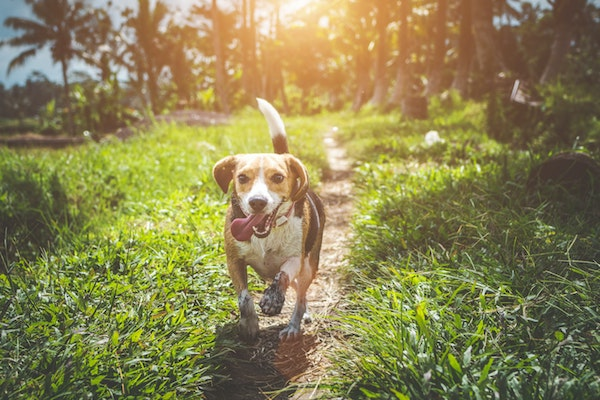 come capire se il cucciolo di cane è felice