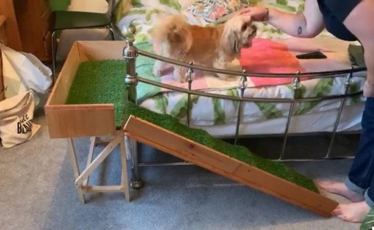 Costruiscono una rampa speciale per l'anziana cagnolina Daisy (VIDEO)