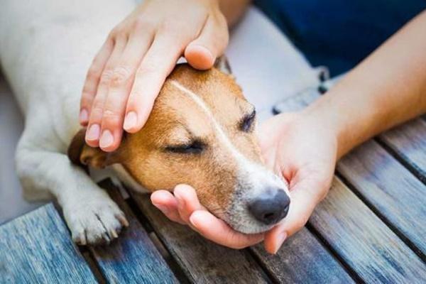 Croccantini scaduti al cane: perché è bene che Fido eviti di mangiarli