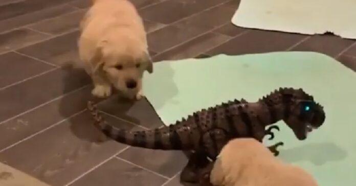cuccioli golden retriever giocano con t-rex miniatura