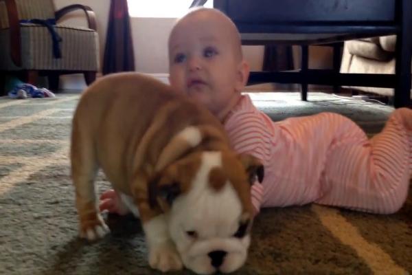 Cucciolo di Bulldog e cucciolo umano sono inseparabili (VIDEO)