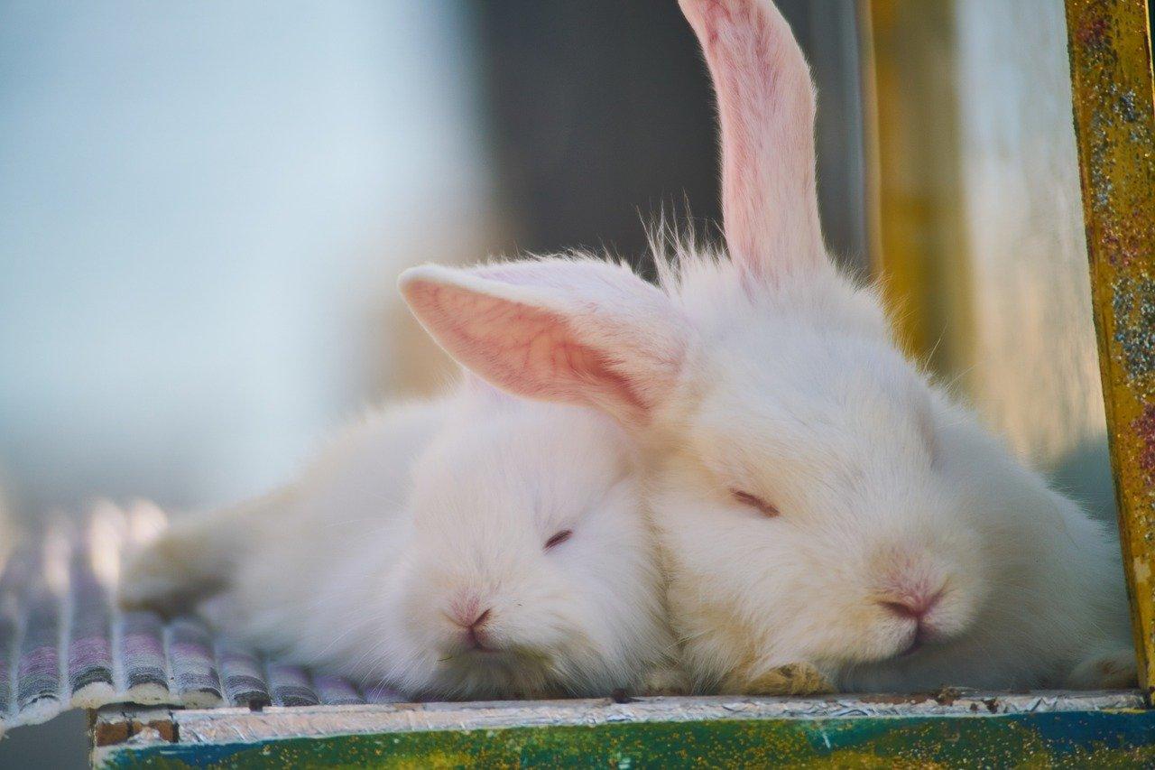 coniglietti si rilassano