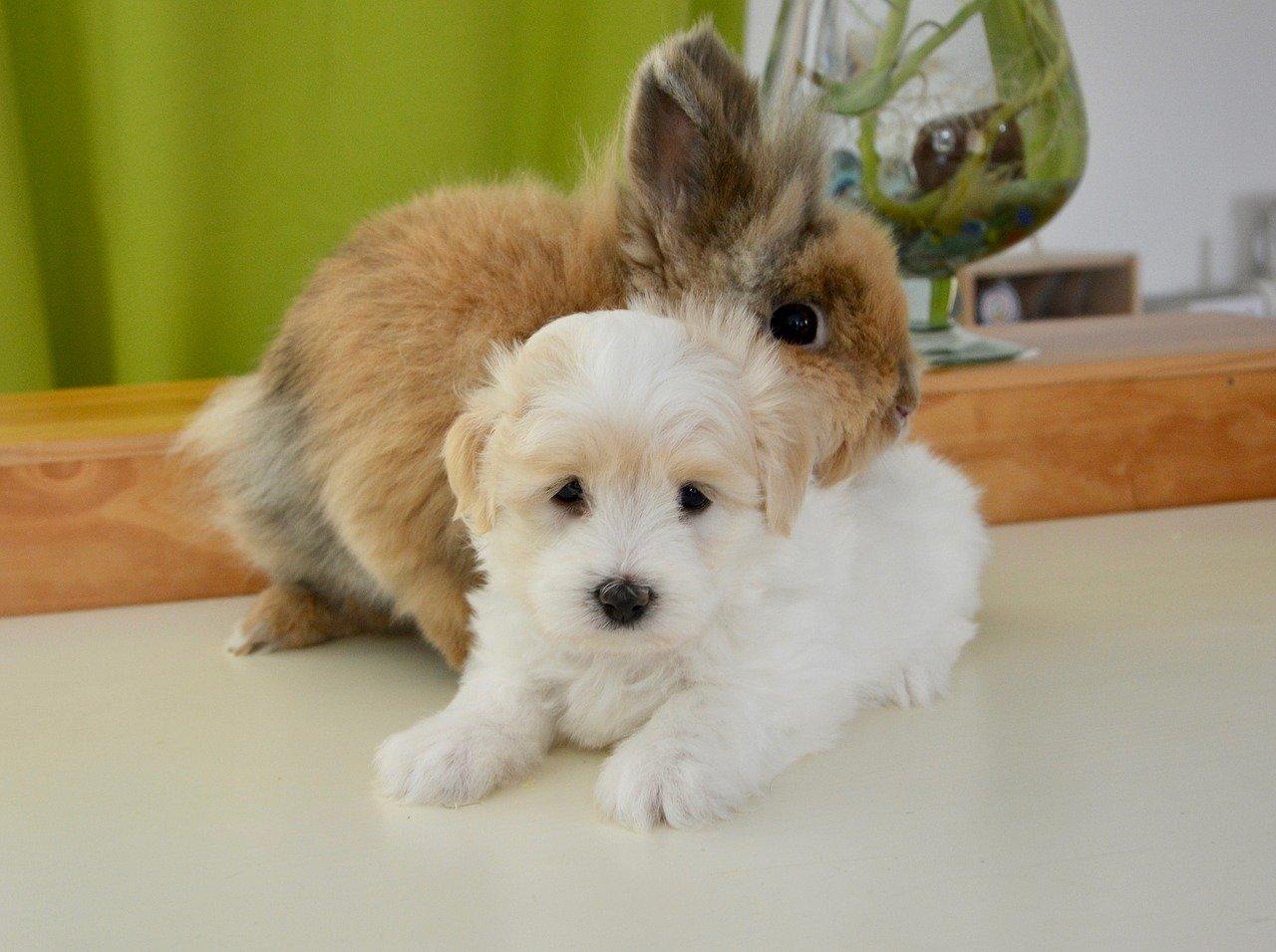 cane e coniglio amici